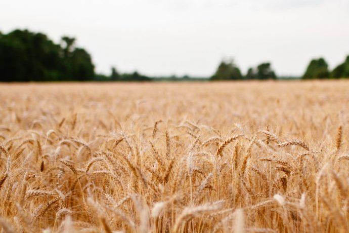landscape-field-sonja-langford-sonja-large