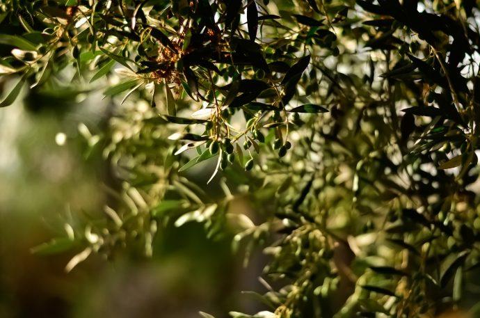green-leaf-fruit-tree-selective-focal-photo-1047312